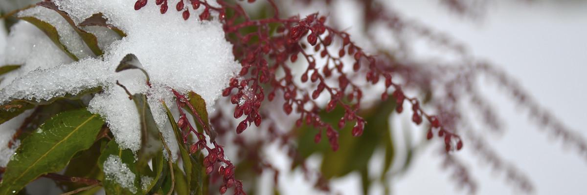 HayfieldsHomePage_Winter4