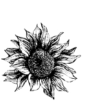 Petals_sketch