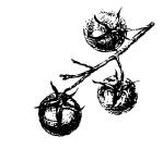 Produce_sketch