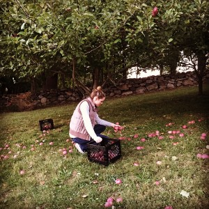 Local apple picking