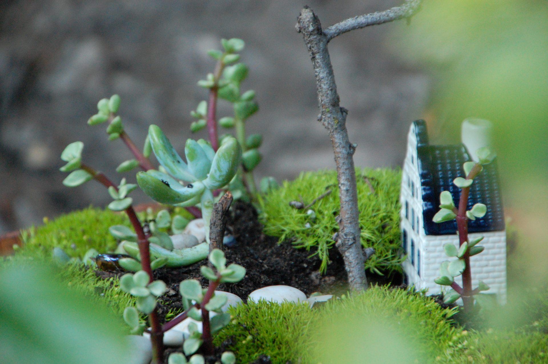 garden-side-view